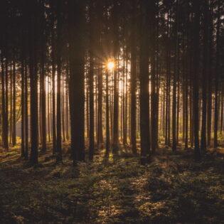 FeedbackForest – terviklahendus andmete kogumiseks ja edastuseks